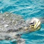 19 Wasserschildkröte