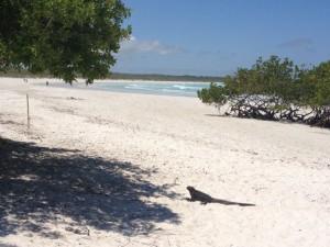 4 Strand mit Meerechse
