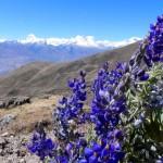 38 Alpenblumen