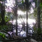 18 Dschungelwanderung