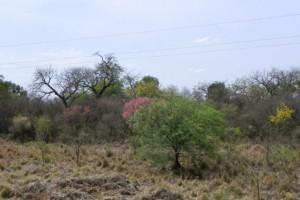 47durch den Chaco