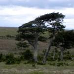 21 Bäume im Wind