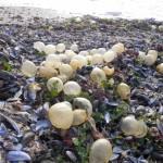 Muscheln und Schildkröteneier