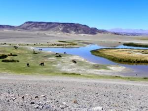 Lagune vor Antofagasta
