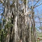 imposante Bäume